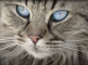 5 Rare House Cat Breeds We Didn't Know Existed